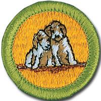 Dog_Care