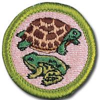 Reptile_and_Amphibian_Study